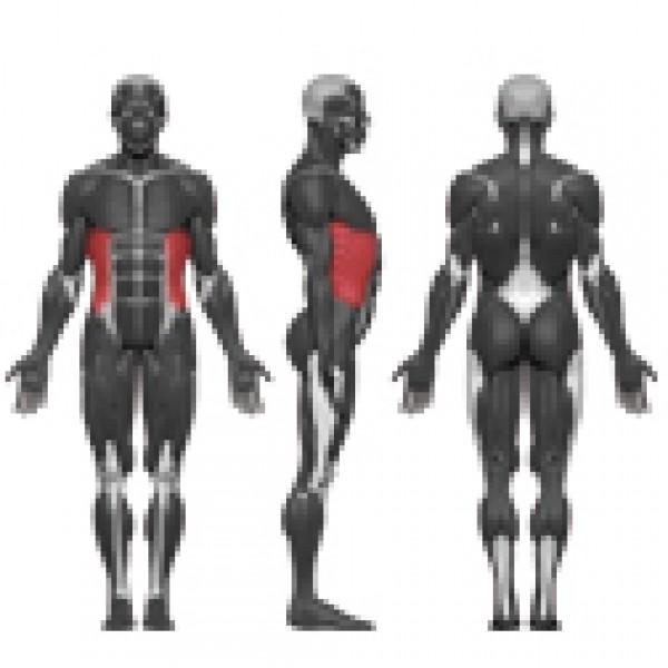 Pilvo raumenų treniruoklis N122